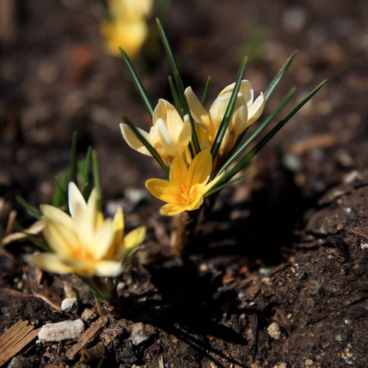 Prosper Where God Has Planted You!