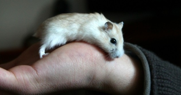 How a hamster helped Spread the Gospel!