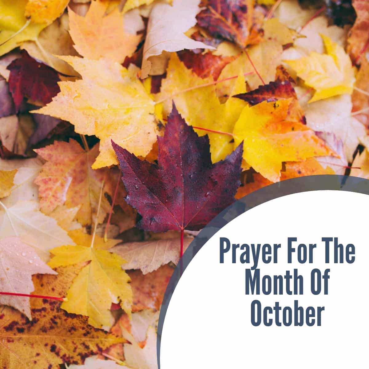 Prayer For The Month Of October
