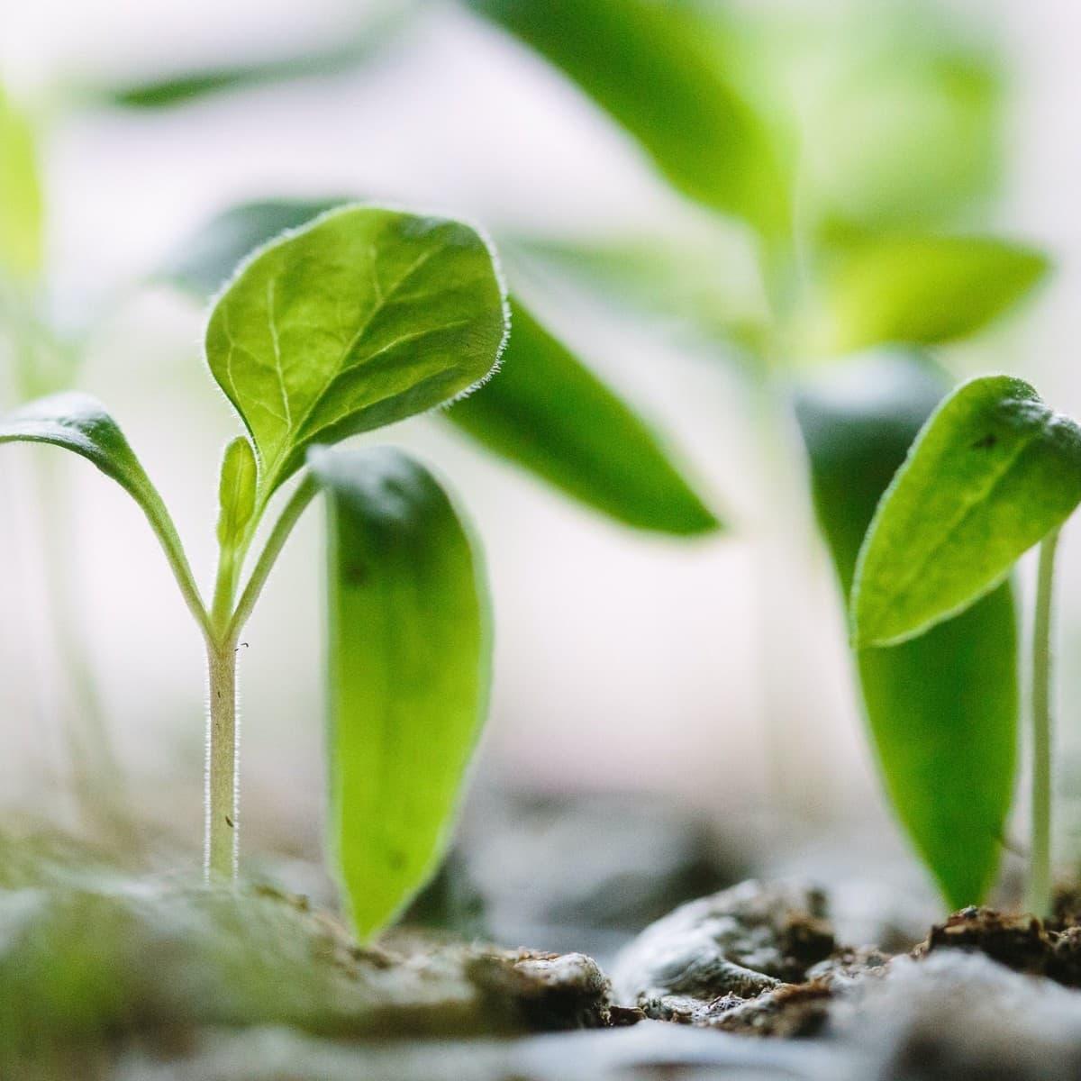 Spiritual Warfare Prayer for Spiritual Growth